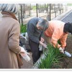 屋上庭園での畑作り